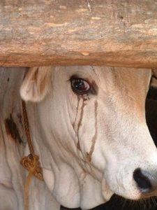 animals, crying, tears2