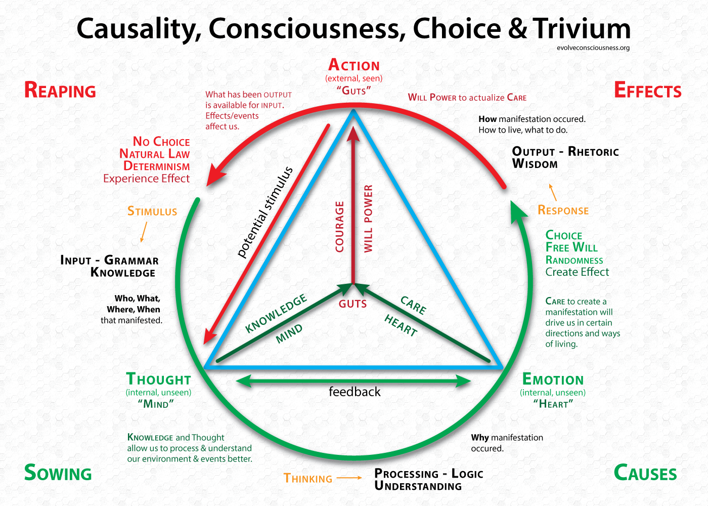 causality consciousness choice and trivium