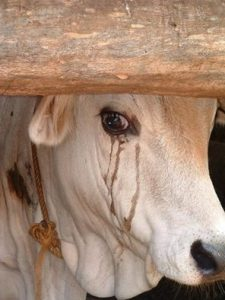 animals, crying, tears2